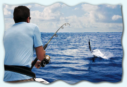 Catching sailfish in Miami